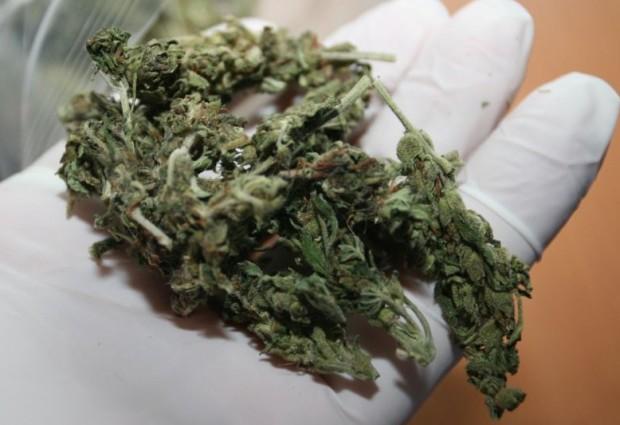 Narkotyki w przesyłce kurierskiej w Niepołomicach